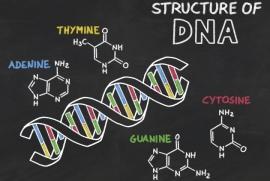 Cientificos-encuentran-una-cuadruple-helice-de-ADN-2