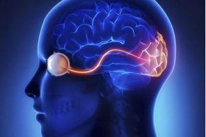 cerebro ojos ilusiones opticas