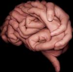 cerebro manos
