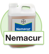 Nemacur Bayer